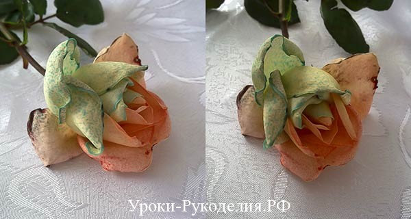 радужная роза, сорта жёлтых роз, цветы, хризантемы крашенные, орхидея покрасить, синие цветы, крап, ароматная радужная роза, букет на день рождение