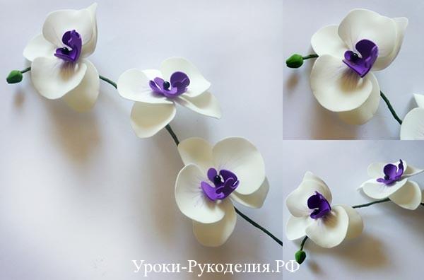 как сделать орхидею