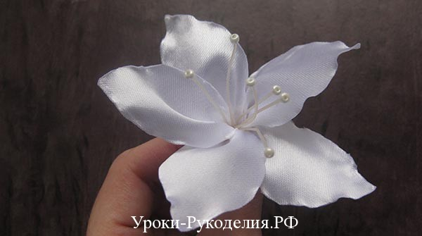тычинки на цветок
