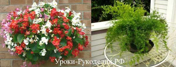 Цветы в доме по феншуй