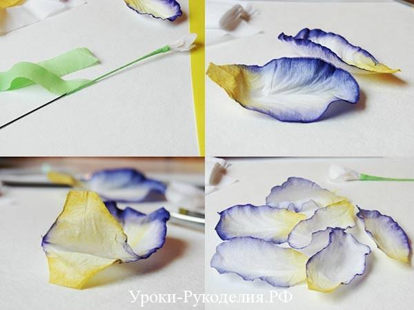 крашенные лепесточки цветка