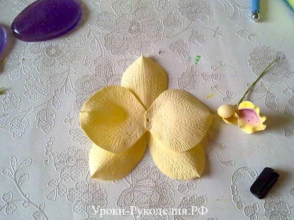 крупная орхидея