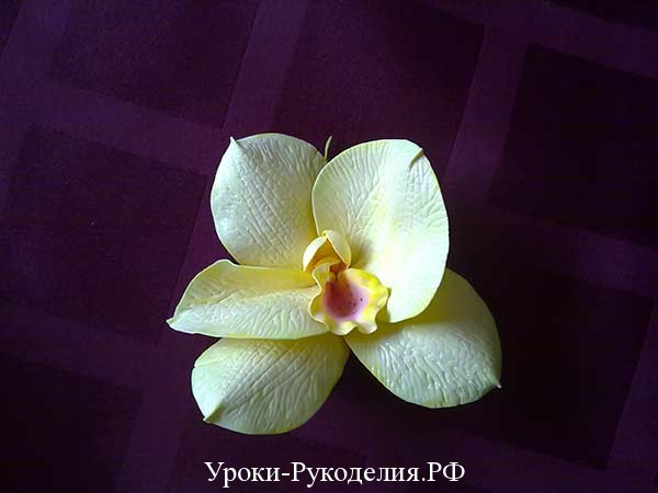 орхидея своими руками