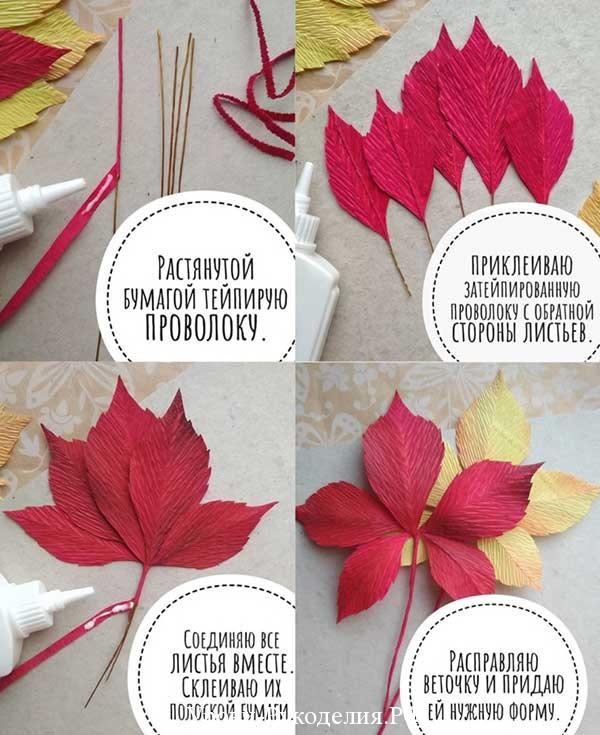 красный лист винограда